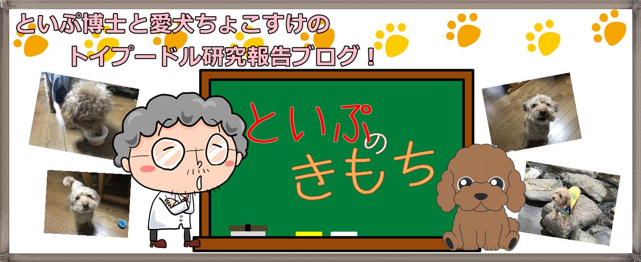 といぷのきもち|トイプードルブログ